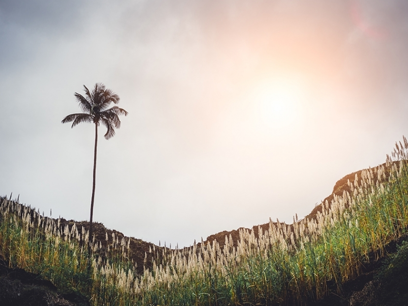 Cana-de-açúcar vai sofrer impacto do clima, diz CEO da BP-Bunge