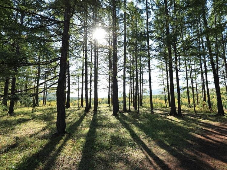 Sul terá concessões florestais com investimento de R$ 285 milhões
